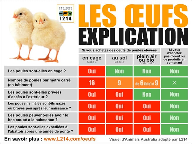 comment-choisir-oeuf-franc